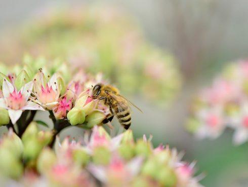 Káros anyagoktól mentes a méhpempő